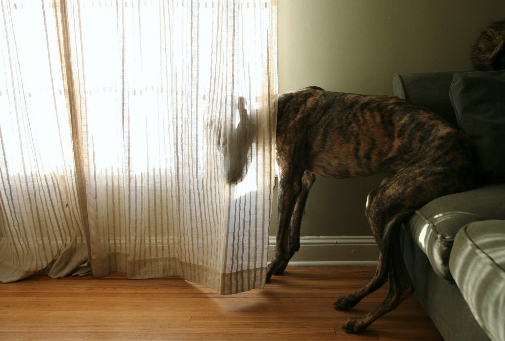 dog curtain